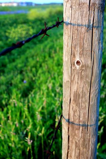 Find your greener pasture: http://texaslora.com/buy/